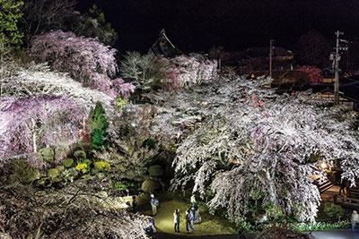 伊那谷、桜物語