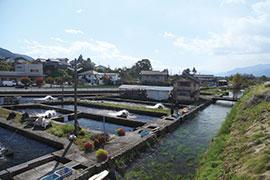 海なし県 信州で出会う、川魚の世界