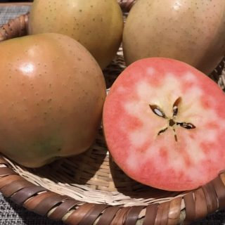 フルーツリレーは…中野から貴重なりんごが届いています♪