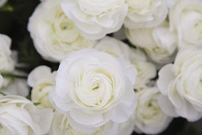 情熱が咲かせる 美しい信州の花