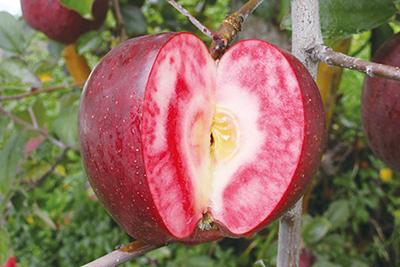 赤肉りんご