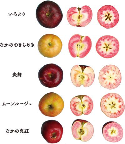 吉家さんが研究開発した5種