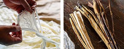 樹皮の繊維