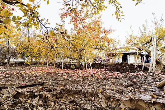 大量の泥が堆積したりんご畑