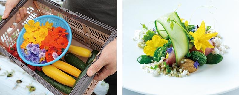 収穫した野菜と料理「鯉と胡瓜」