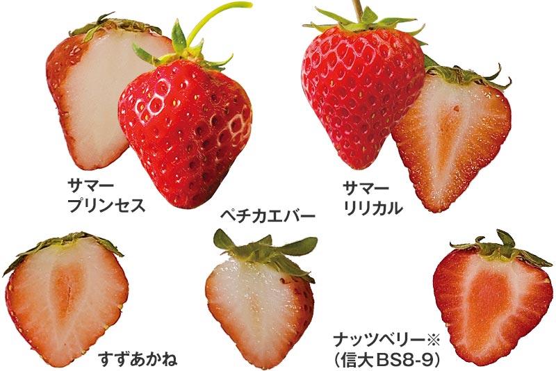 いちご5種