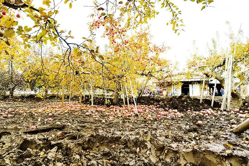 浸水したりんご畑