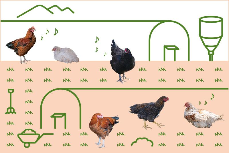 ライフスタイル・オブ・信州「どんどんうま味があふれ出す!長野の地鶏がおいしい理由」