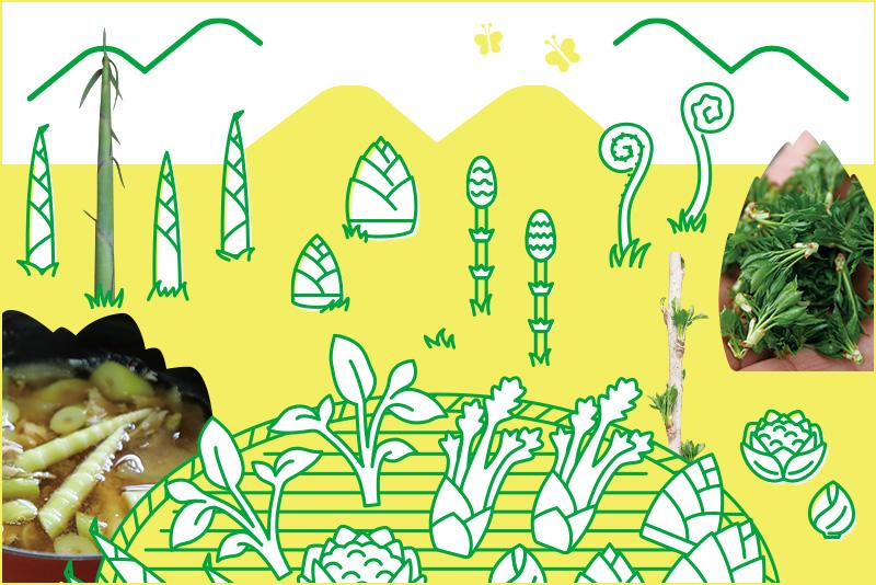 ライフスタイル・オブ・信州「春の野山は幸せいっぱい!信州の山菜で感じる大地の息吹」