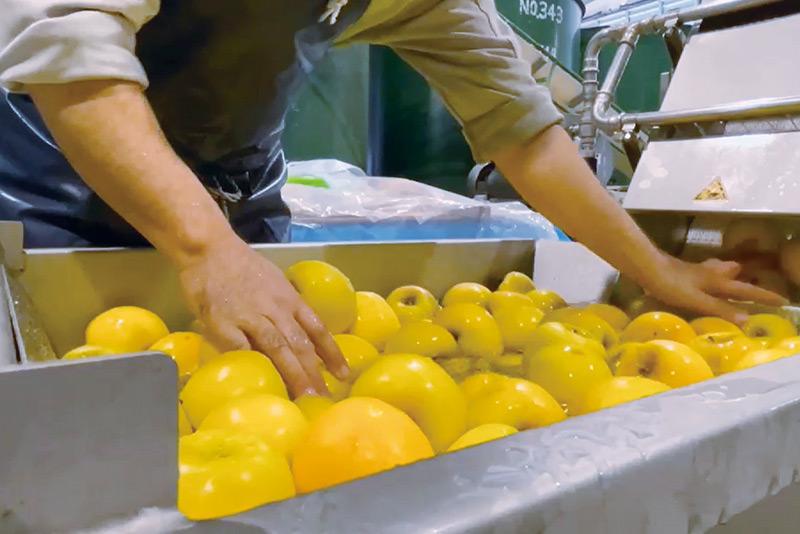 りんごの洗浄の様子