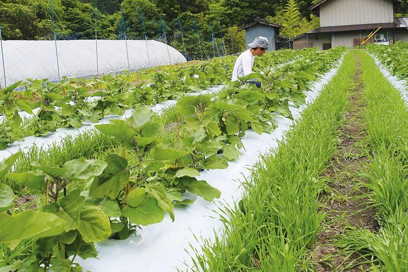 板倉さんが管理する畑
